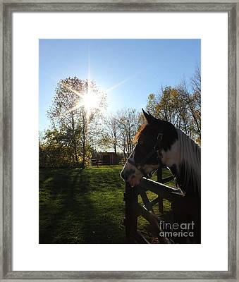 Horse With Sunburst Framed Print