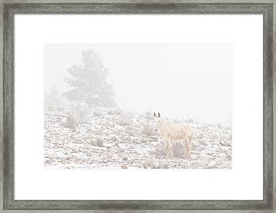 Horse With Winter Season Snow And Fog Framed Print by James BO  Insogna