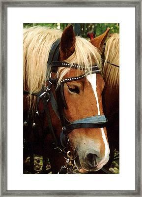 Horsehead Framed Print by Susan Crossman Buscho