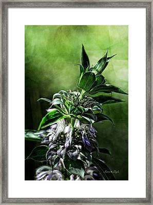 Framed Print featuring the photograph Horsemint by Karen Slagle