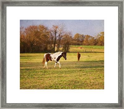 Horseplay Framed Print