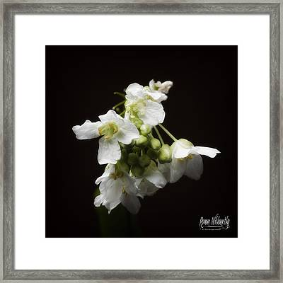 Horseradish Bloom Framed Print