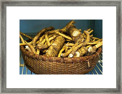 Horseradish Framed Print by Tom Giske