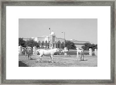 Horses And Emiri Palace Framed Print