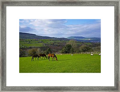 Horses And Sheep In The Barrow Valley Framed Print by Panoramic Images