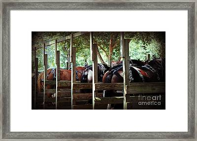 Horses Arse Framed Print