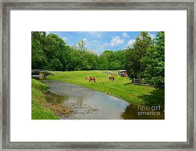 Horses At Home On The Range Framed Print by Paul Ward