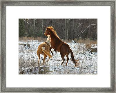 Horses At Play - 10dec5690b Framed Print by Paul Lyndon Phillips