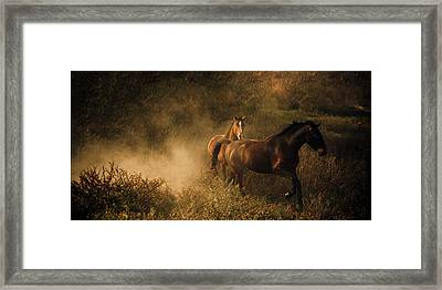 Horses At Play In The Dust Framed Print by Leslie Heemsbergen