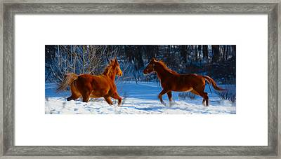 Horses At Play Framed Print by Tracy Winter