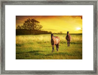 Horses At Sunset Framed Print by Amanda Elwell