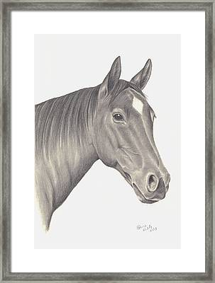 Horses Beauty Framed Print