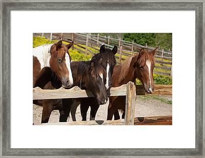 Horses Behind A Fence Framed Print