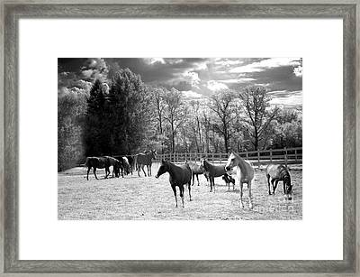 Horses Black And White Infrared - Surreal Horses Black White Nature Landscape Equine Framed Print by Kathy Fornal