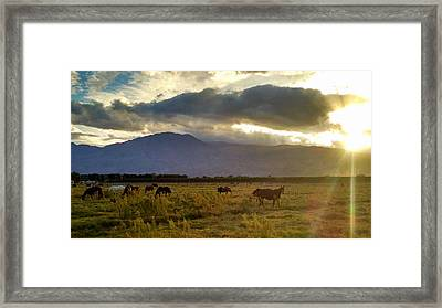 Horses Framed Print by Chris Tarpening