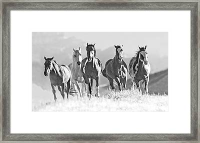 Horses Crest The Hill Framed Print by Carol Walker