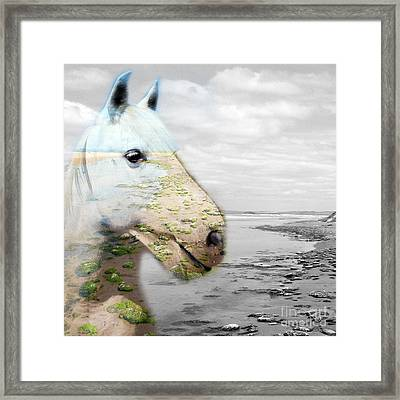 Horses Dream Framed Print by Jo Collins