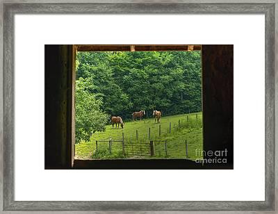 Horses Feeding In Field Framed Print by Dan Friend