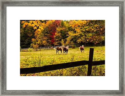 Horses Frolicking In The Paddock Framed Print by Jeff Folger