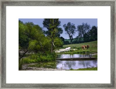 Horses Grazing At Water's Edge Framed Print by Tom Mc Nemar
