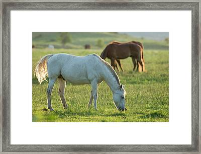 Horses Grazing Before Sunset, Philmont Framed Print