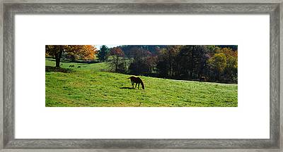 Horses Grazing In A Field, Kent County Framed Print