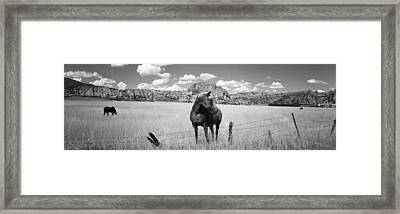 Horses Grazing In A Meadow, Kolob Framed Print by Panoramic Images