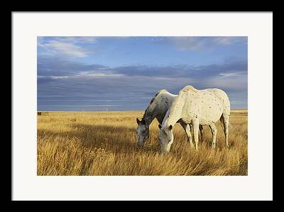 Cypress Hills Interprovincial Park Framed Prints