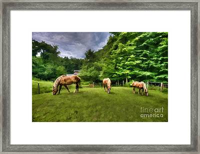 Horses Grazing In Field Framed Print by Dan Friend