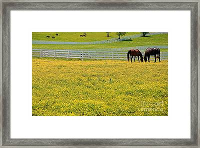 Horses Grazing In Field Framed Print