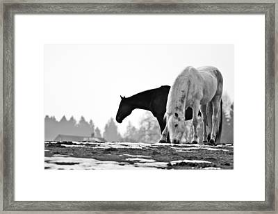Horses Grazing Framed Print by Sonny Marcyan
