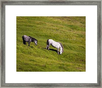Horses Grazing, Summertime, Iceland Framed Print by Panoramic Images