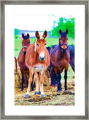 Horses Horses Framed Print by Carolina Mendez
