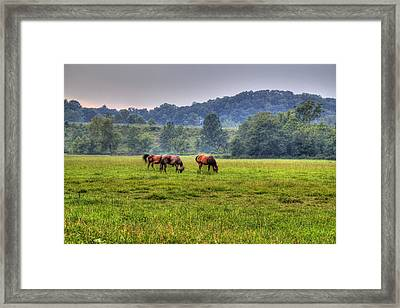 Horses In A Field 2 Framed Print