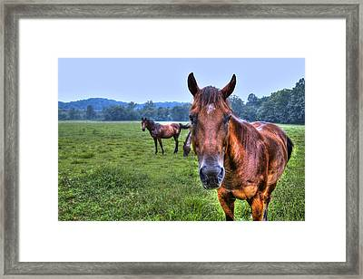 Horses In A Field Framed Print