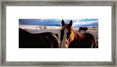 Horses In A Field, Montana, Usa Framed Print by Panoramic Images