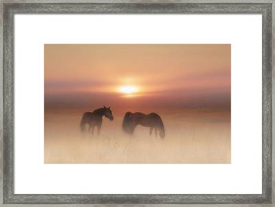 Horses In A Misty Dawn Framed Print