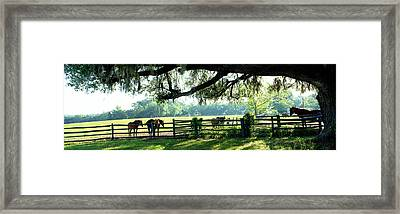 Horses In A Ranch, Hobeau Farms Barn Framed Print by Panoramic Images