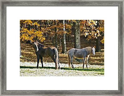 Horses In Autumn Pasture   Framed Print by Susan Leggett