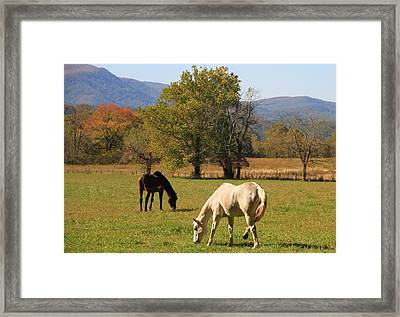 Horses In Cades Cove Framed Print by Dan Sproul