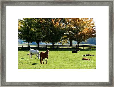 Horses In Fall Framed Print