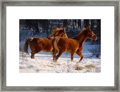 Horses In Motion Framed Print