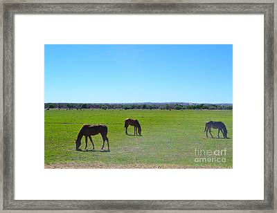 Framed Print featuring the photograph Horses In New Mexico by Utopia Concepts