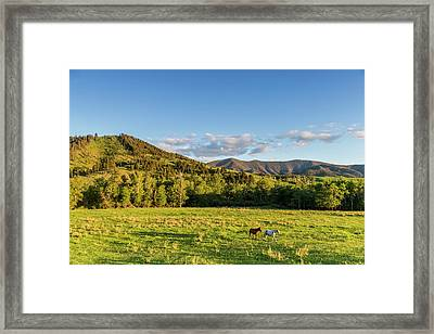 Horses In Pasture In The Foothills Framed Print by Chuck Haney