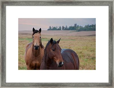 Horses In Rural Northwest Iowa  Framed Print