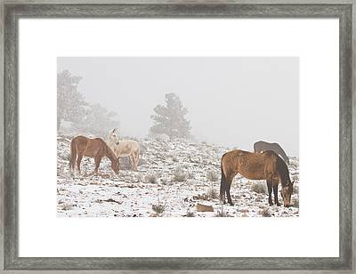 Horses In The Winter Snow And Fog Framed Print by James BO  Insogna