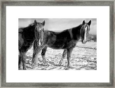 Horses In Winter Coats Framed Print by Joan Herwig