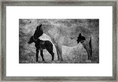 Horses, Mare And Foal  Alberta, Canada Framed Print by Ron Harris