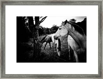 Horses - Nooitgedacht Framed Print by Isabel Laurent