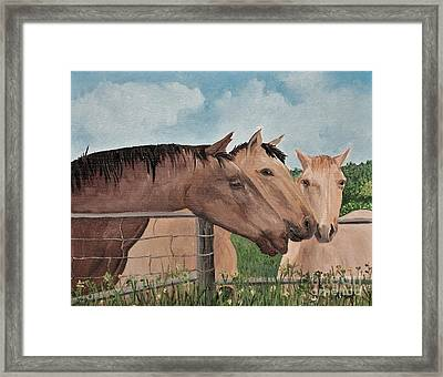 Horses Of British Columbia Framed Print by Reb Frost